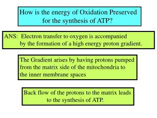 How is the energy of Oxidation Preserved               for the synthesis of ATP?
