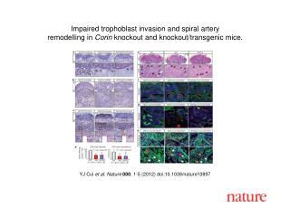YJ Cui  et al .  Nature 000 ,  1 - 5  (2012) doi:10.1038/nature10897