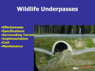 Wildlife Underpasses