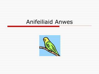 Anifeiliaid Anwes