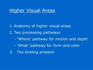 Higher Visual Areas Anatomy of higher visual areas Two processing pathways