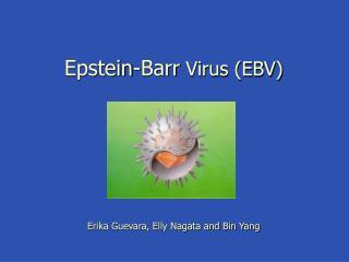 Epstein-Barr Virus EBV       Erika Guevara, Elly Nagata and Bin Yang
