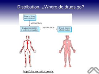 Distribution. �Where do drugs go?