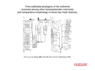 Z-X Luo  et al. Nature 476 , 442-445 (2011) doi:10.1038/nature10291