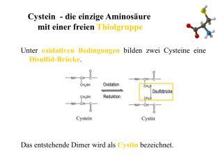 Cystein  - die einzige Aminos ure  mit einer freien Thiolgruppe