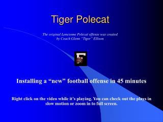 Tiger Polecat