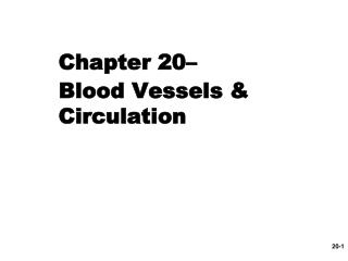 Chapter 20–  Blood Vessels & Circulation