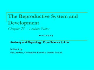The Reproductive System and Development Chapter 25 – Lecture Notes