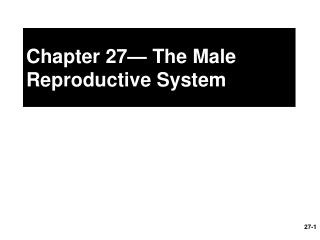 Chapter 27— The Male Reproductive System