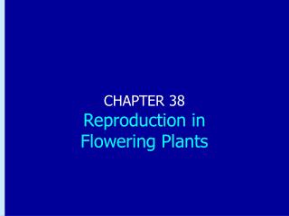 CHAPTER 38 Reproduction in  Flowering Plants