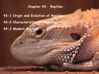 Chapter 43:  Reptiles