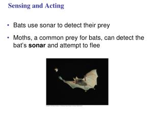 Sensing and Acting