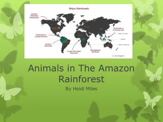 Animals in The Amazon Rainforest
