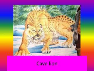 Cave lion