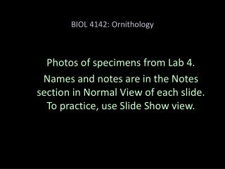 BIOL 4142: Ornithology