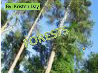 By: Kristen Day