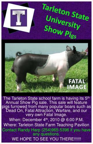 Tarleton State University Show Pi gs