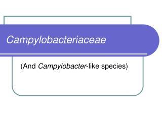 Campylobacteriaceae