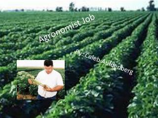 Agronomist Job