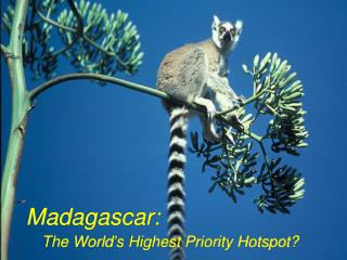 Madagascar: The World's Highest Priority Hotspot?