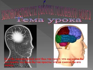 закономерности работы головного мозга