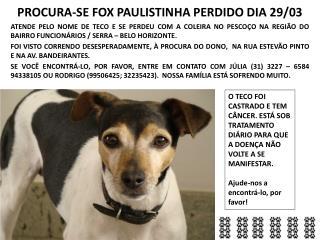 PROCURA-SE FOX PAULISTINHA PERDIDO DIA 29/03