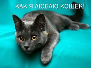 Как я люблю кошек!