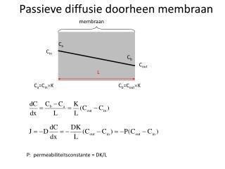Passieve diffusie doorheen membraan