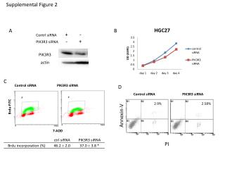 Contrl siRNA +         - PIK3R3  siRNA -         +