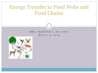 Energy Transfer in Food Webs and Food Chains