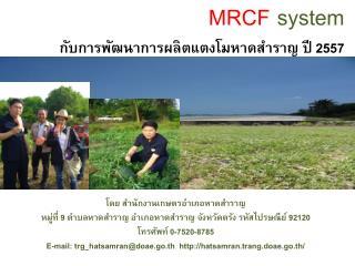 MRCF  system กับการพัฒนาการผลิตแตงโมหาดสำราญ ปี 2557