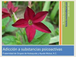 Adicción a substancias psicoactivas Fraternidad de Grupos de Autoayuda y Ayuda Mutua, A.C.