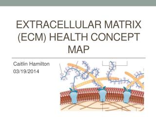Extracellular matrix (ECM)  Health concept map