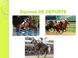 Equinos DE DEPORTE