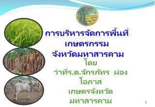 การบริหารจัดการพื้นที่เกษตรกรรม   จังหวัดมหาสารคาม