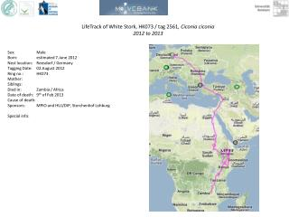 LifeTrack  of White  Stork, HK073 / tag 2561 ,  Ciconia ciconia 2012 to 2013