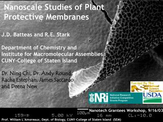 Nanoscale Studies of Plant  Protective Membranes