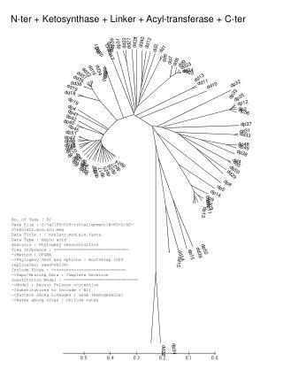 No. of Taxa : 92 Data File : Z:\gl\PS-016-rrk\alignment\N-KS-L-AT-C\nkslatc.mod.alng