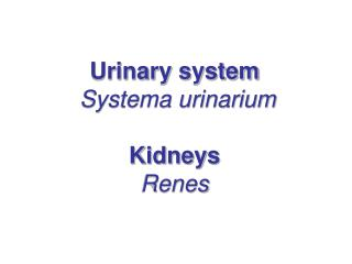 Urinary system Systema urinarium  Kidneys Renes