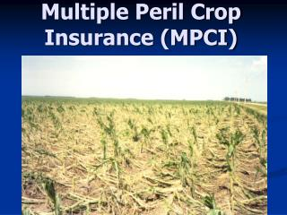 Multiple Peril Crop Insurance (MPCI)