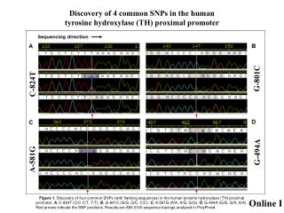 Discovery of 4 common SNPs in the human  tyrosine hydroxylase (TH) proximal promoter