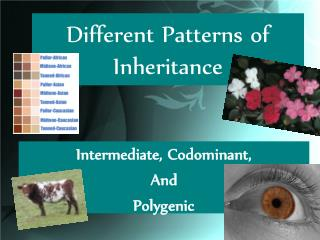 Different Patterns of Inheritance