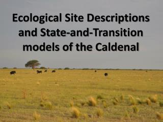 Ecological Site Descriptions and State-and-Transition models of the  Caldenal