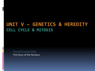 Unit V – Genetics & Heredity Cell Cycle & Mitosis