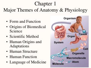 Chapter 1 Major Themes of Anatomy  Physiology