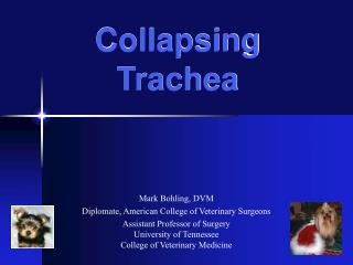 Collapsing Trachea
