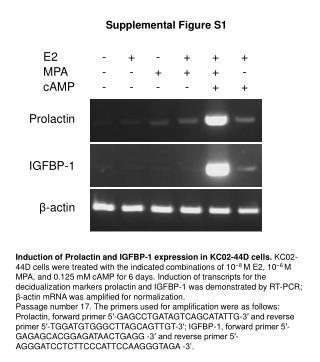 Supplemental Figure S1