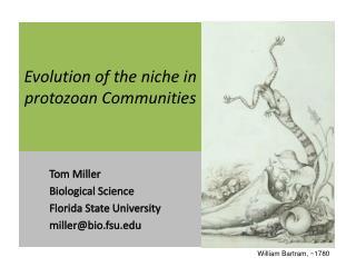 Evolution of the niche in protozoan Communities