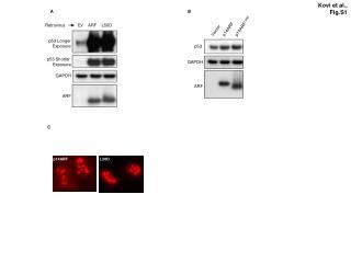 Kovi et al.,    Fig.S1