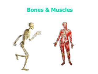 Bones & Muscles